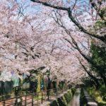 桜にまつわる古人の歌(2)。この世に桜がなければと詠んだ在原業平も実は桜好き。